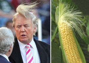 Donald Trump 's distinctively coiffured hair sparks Social Networks to find the animals that look like the US Presidential hopeful. Cat owners brush their feline's hair forward or sometimes add fur to resemble the mighty republican's comb-over - other animals need no help, looking uncannily like the out-spoken New Yorker. / Source: INTERNET